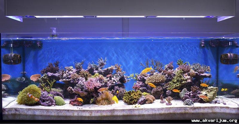 Mali morski akvarijum